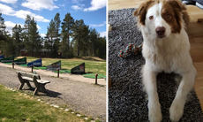 Golfare attackerade hund