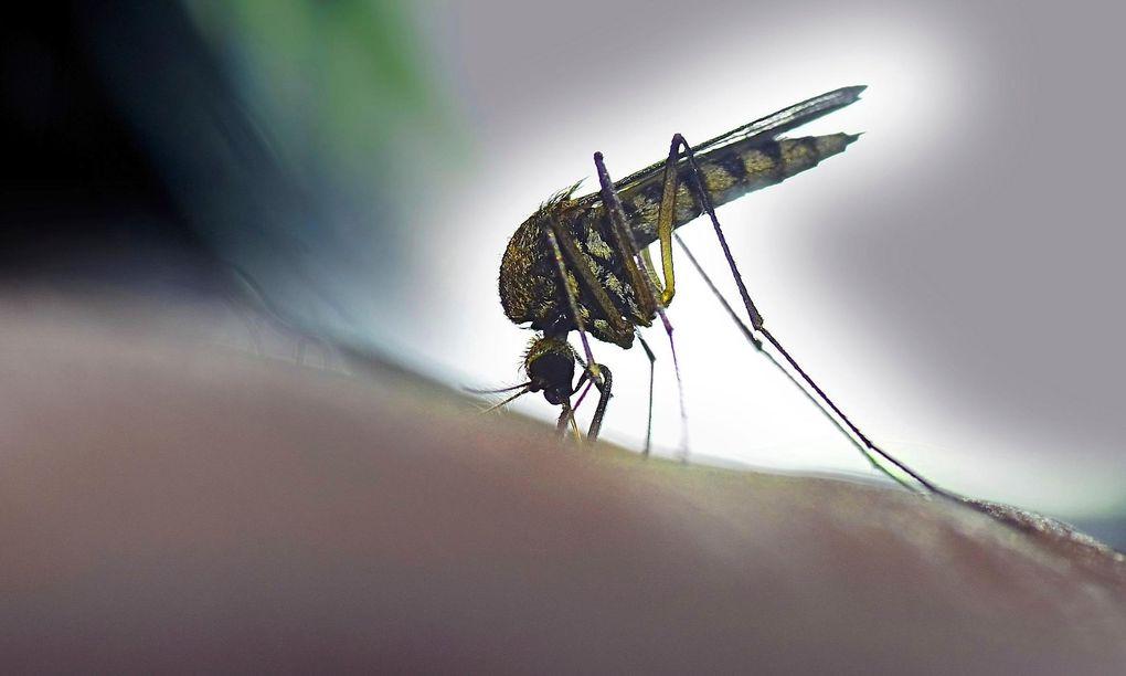 Kan Zika-viruset hota OS-golfen?