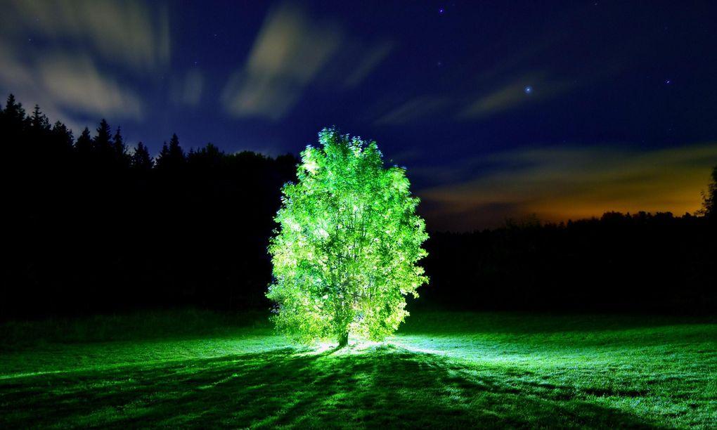 Spela golf på natten –med träden som belysning!