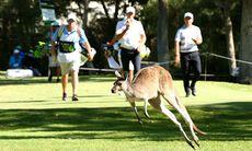 TV: Kängurur stoppade spelet...