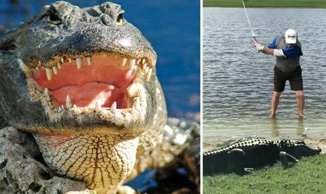 alligator galning.jpg